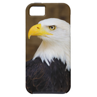 Bald Eagle iPhone Cases