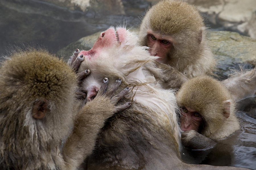group of monkeys photo