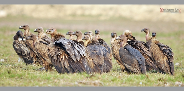 A Group of Vultures is Called a Kettle or Venue
